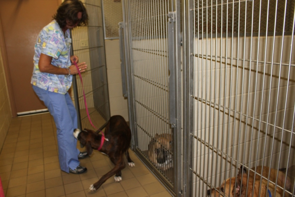 Lake Veterinary Clinic Hospital Tour